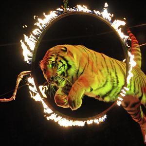 Цирки Электрогорска