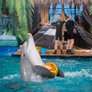 Дельфинарии, океанариумы Электрогорска