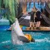 Дельфинарии, океанариумы в Электрогорске