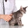 Ветеринарные клиники в Электрогорске